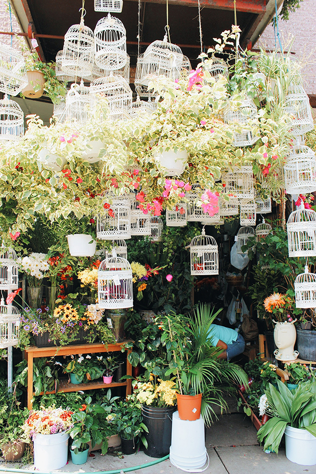 Dragon Flowers A Fairy Tale Flower Shop Montreall