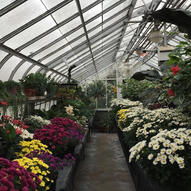 Westmount Greenhouse_Montreal4