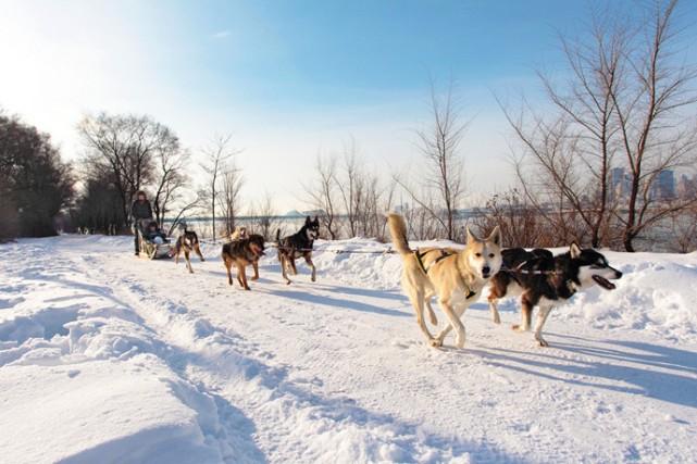 doggsledding montreal