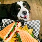 This Cute Little Montreal Café Has a Doggie Mascot!