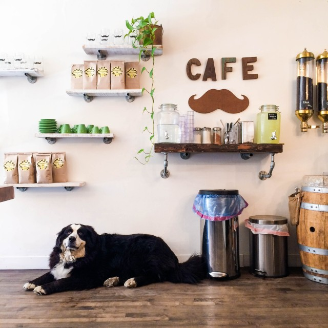 Dog_moustache_cafe_montreal