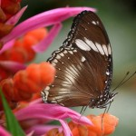 Get Lost in a World of Butterflies at the Botanical Gardens