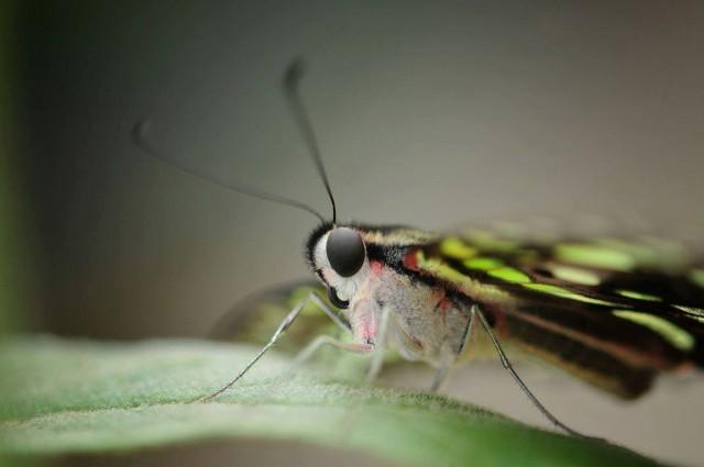 nature s balm montreal botanical gardens butterfly exhibit (3) andré sarrazin