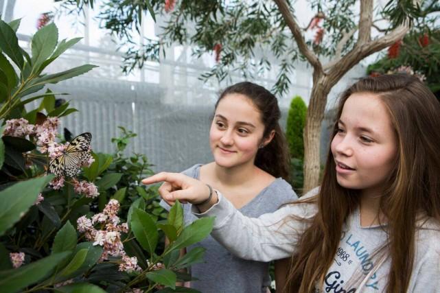 nature s balm montreal botanical gardens butterfly exhibit (4) mathieu rivard